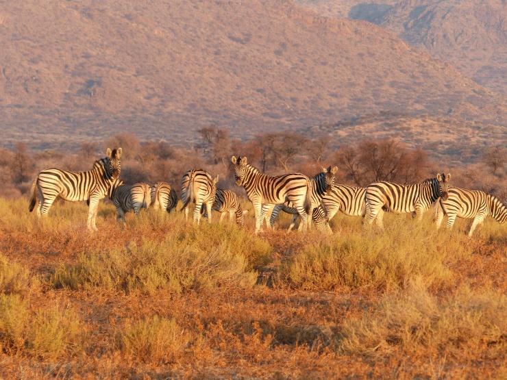 upsplash-JohanS-namibia
